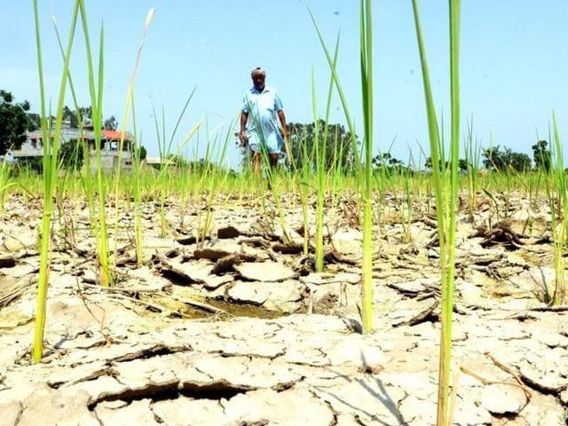 Farmer Suicides,Agrarian crisis,Vidarbha