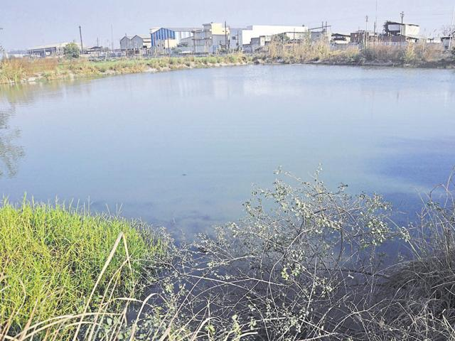 The petitioner has alleged that untreated water from the factory is entering this lake in Hapur district.