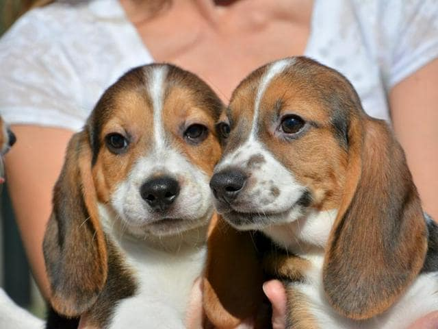 The report said Laura and Richard have become the first in Britain to clone a dead pet dog.