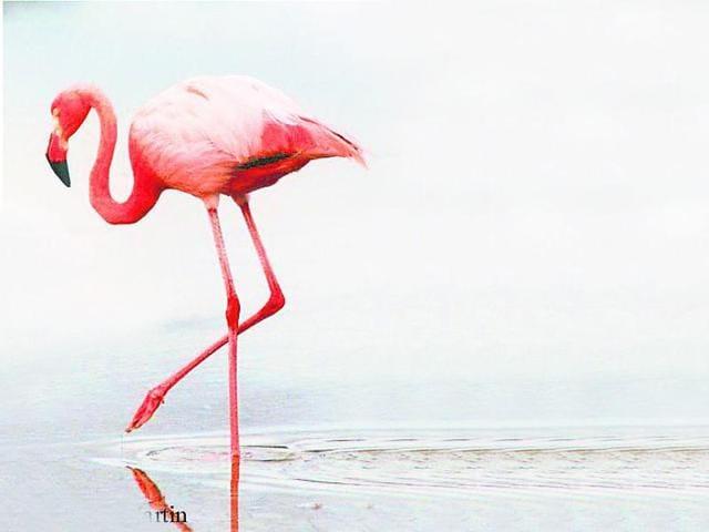 Migratory birds,Mumbai,Uran