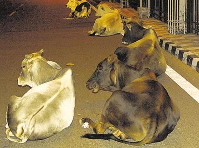 Carcasses,9 cows killed,Sangrur