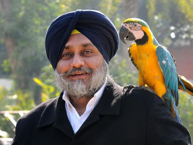 Deputy chief minister Sukhbir Badal with his pet parrot, a Brazilian Macaw, at his residence in Chandigarh on Monday.