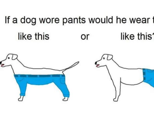 No one can agree on how a dog is supposed to wear human pants