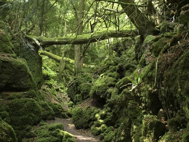 Puzzlewood,Star Wars,Star Wars: The Force Awakens