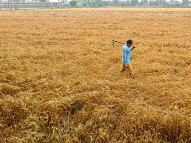The farmer had taken a loan of Rs 30,000 to purchase seeds and fertiliser, but was unable to repay it due to losses caused by the drought.