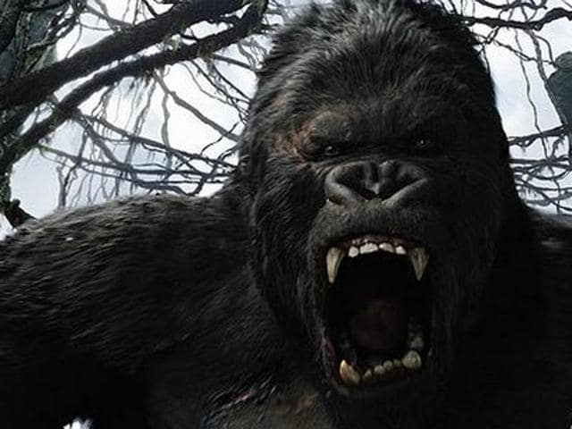 An image from the Senckenberg Research Institute shows the estimated size of the Giganthopithecus or giant gorilla (L) in comparison with a human. The Gigantopithecus, a giant gorilla that looks like King Kong, disappeared a million years ago from the surface of the Earth due to the inability to adapt to environmental changes according to scientists.(AFP Photo)