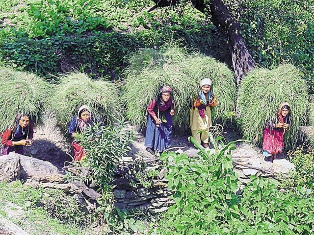 Ghasyari Queen contest in Uttarakhand's Tehri district is a unique competition in which the participant women will be required to cut maximum quantity of grass in two minutes.
