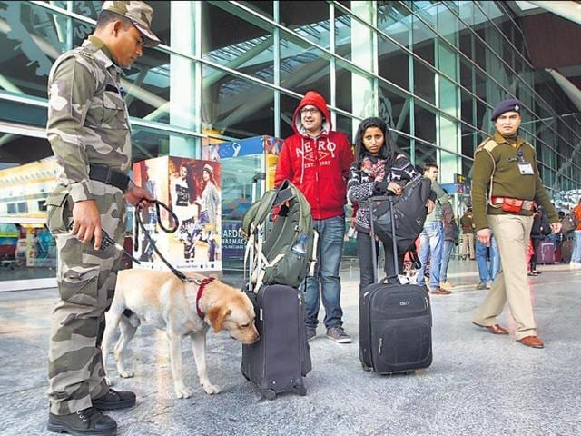 A CISF sniffer dog checks passengers' luggage at the Indira Gandhi International Airport in Delhi.