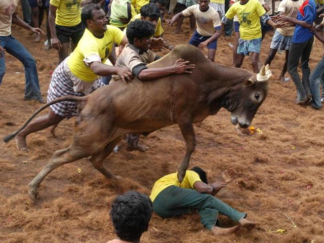 Jallikattu also known Eruthazhuvuthal is a bull taming sport played in Tamil Nadu as a part of Pongal celebrations on Mattu Pongal day.