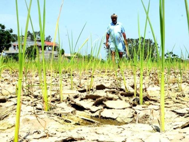 Bundelkhand's drought-ravaged land leading to farmer suicides
