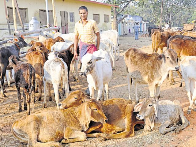 A cow shelter cannot refuse new entrants as this would enrage activists of the Gau Raksha Dal.