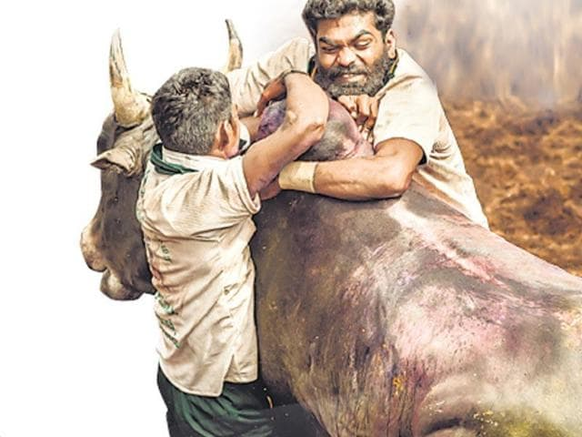 The environment ministry had last week brought out a notification lifting the ban on Jallikattu.
