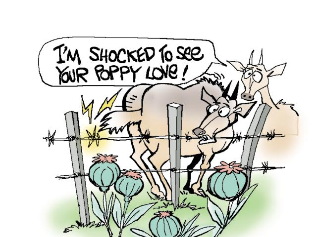 The nilgais, the largest antelopes in Asia, are addicted to opium and stop at nothing to get to it.