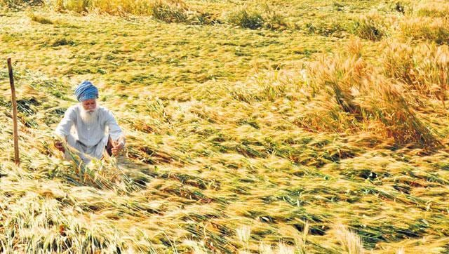 Even as the states of Haryana and Punjab are experiencing temperature higher than normal this winter, the experts are hoping for a good wheat crop this Rabi season.