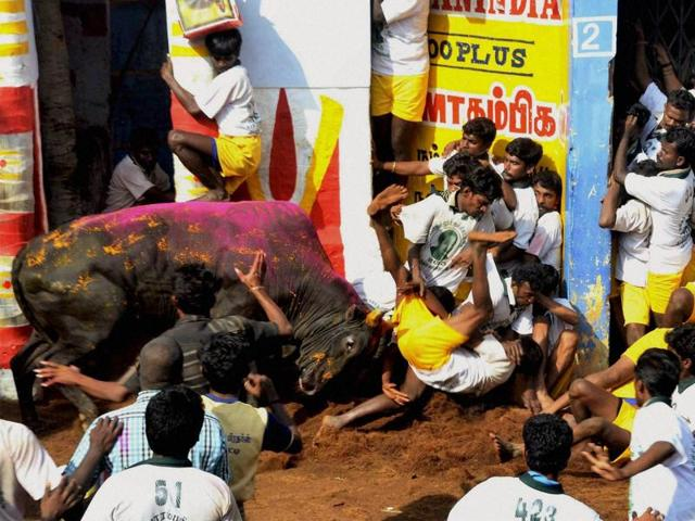 People protesting near Madurai on Tuesday against  the Supreme Court order banning Jallikattu, the bull-taming sport.