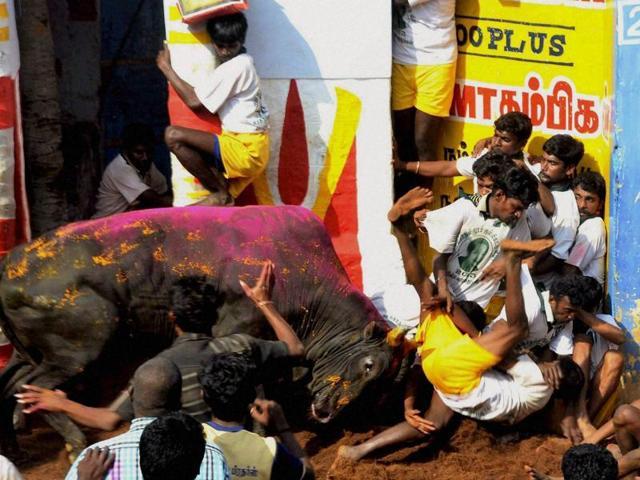 Horse racing,Jallikattu,Tamil Nadu