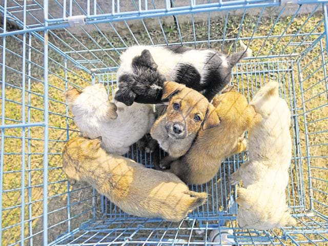 According to the residents and the members of the NGO, it seemed like the puppies were relocated as their mother was not around.