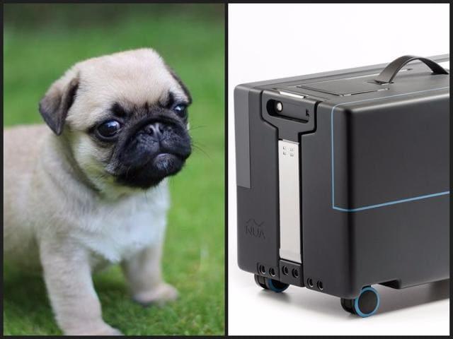 Smart Travel,Smart Suitcase,Robotic Suitcase