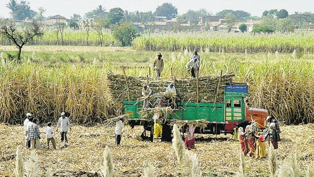 Already passing through a phase of acute agrarian crisis, no cash flow from the Centre has left the officials high and dry.