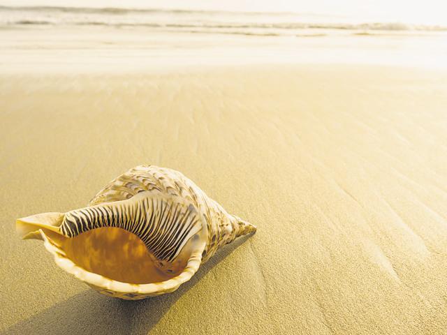 Conch,Shankh,Spirituality