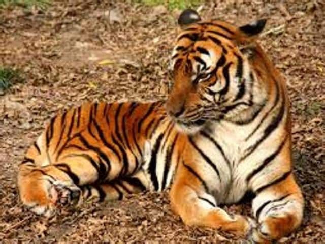 Tigers,Centre,funding