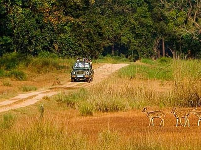 """The Supreme Court has refused to entertain a batch of petitions by environment activists seeking its intervention to """"save"""" a tiger corridor between Pench and Kanha wildlife parks in Madhya Pradesh"""