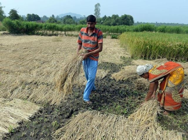 (Representative image) 1,000 farmers had committed suicide in the drought prone Marathwada region in 2015, a Bombay high court bench was informed by the government.