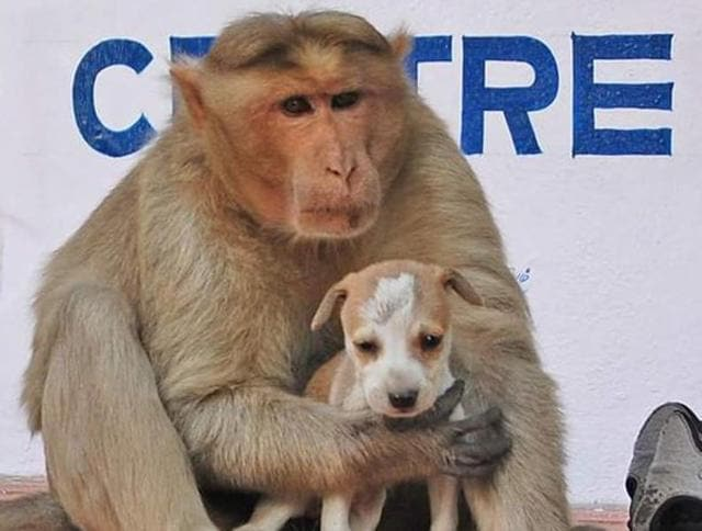 The monkey fights other big dogs on the streets to keep the pup safe.