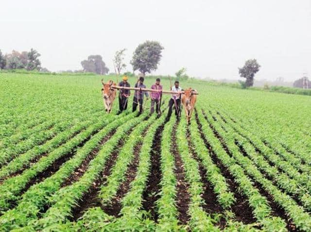 According to the survey, 85% farmers (including both in the marginal as well as the large category) are under debt.