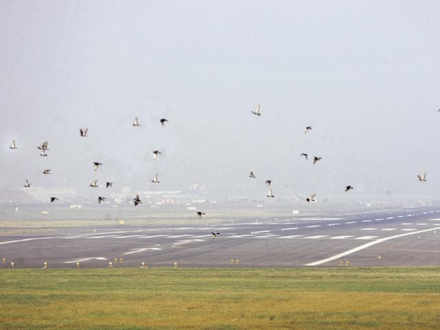National Centre for Cell Science,Bird hits at airports,Bird hit plane