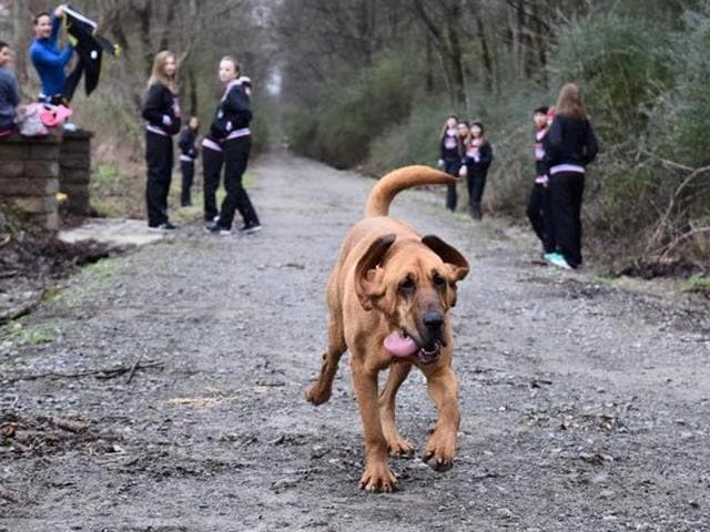 Ludivine, a pet hound dog, snuck out of her owner's garden and joined runners at the start of the Trackless Train Trek Half Marathon.