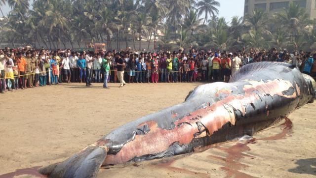 whale,juhu beach whale,mumbai whale