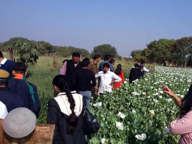 Probationary IRS officers take stock of opium production in Kanavati village in Neemuch on Thursday.