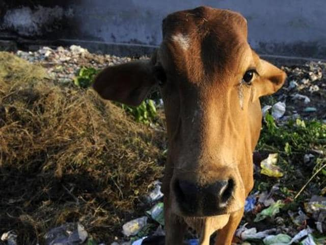 Gurgaon,cow meat,beef
