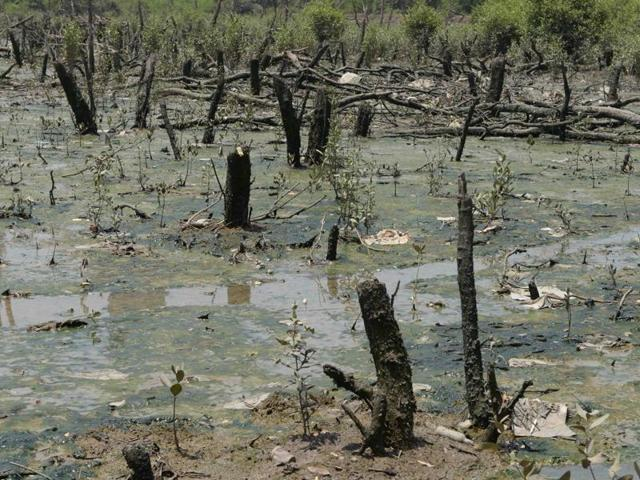 3 cases of mangrove destruction reported in Mumbai last month