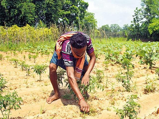 Odisha enacted the land ceiling act in 1974, acquiring surplus plots of big landowners to redistribute it among the landless.