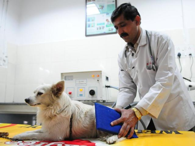 People que up for physiotherapy of their pets in Bhopal