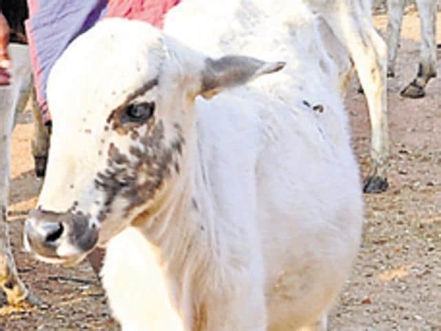There are more than 1.6 lakh stray cows in Punjab for which cow ranches were being constructed to ensure proper upkeep and assistance to these cows.