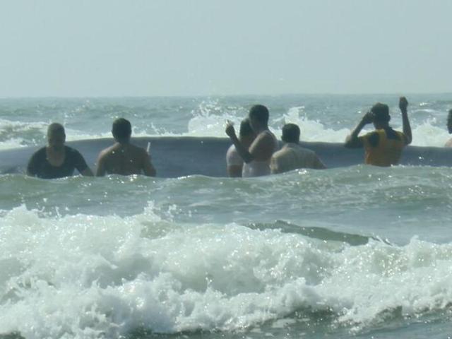 In pics: 40-feet blue whale rescued at Ratnagiri