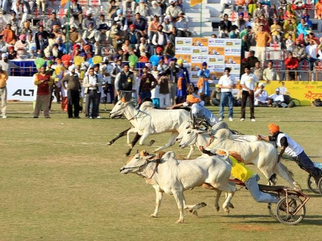 The Supreme Court had recently stayed a central government notification allowing bull races.