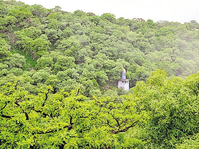 Mangar Bani is the only sacred grove in north India.(Parveen Kumar/HT File Photo)