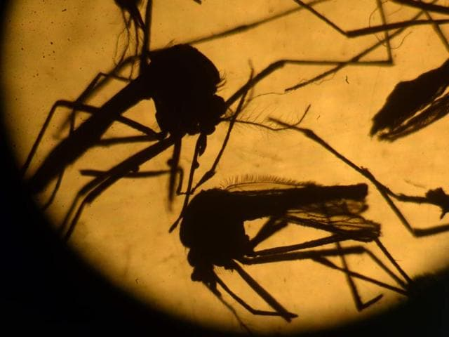Spain,Zika virus,Health emergency