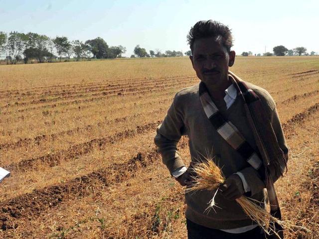 A farmer at his dried-up wheat farm at Segwal village in Khandwa district of Madhya Pradesh.