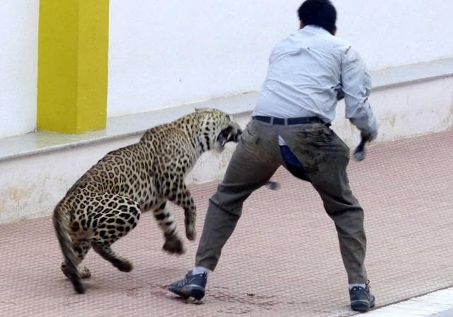 A leopard was spotted at Vibgyor school at Kundalahalli near Whitefield
