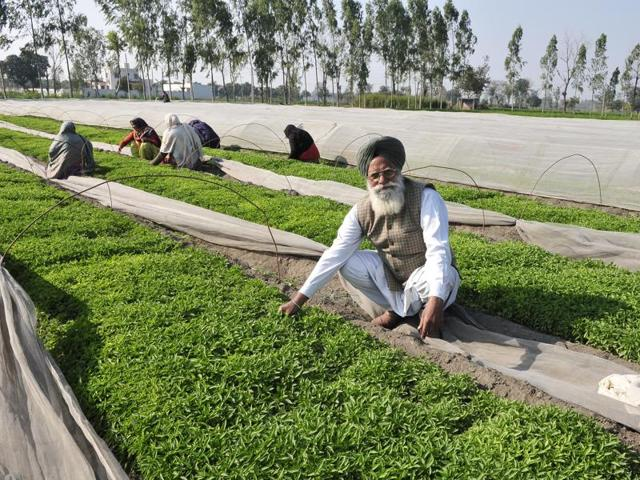 Sitting on a fortune, Nek Singh will tell you that chilli farming involves a lot of sweat but no tears.