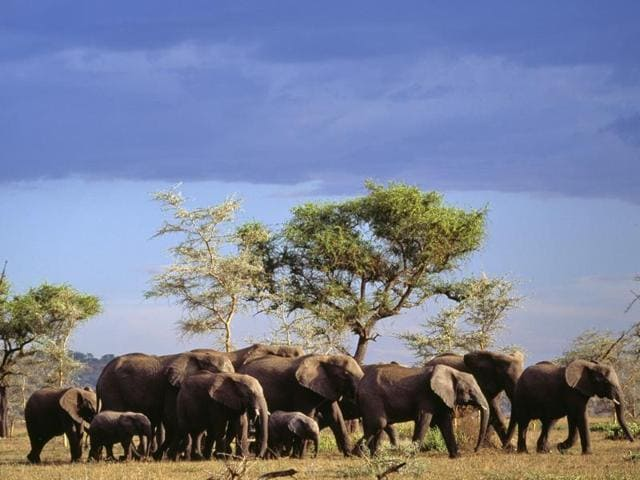 The Chobe National Park is home to 40,000 elephants.