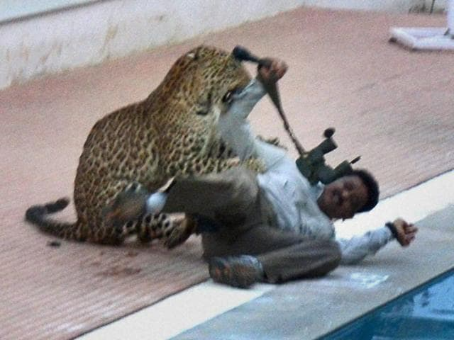 A leopard attacked a cameraman in a school in Bengaluru after it strayed on to the campus on Sunday.  Forest officials eventually subdued the animal with two tranquillizer darts.
