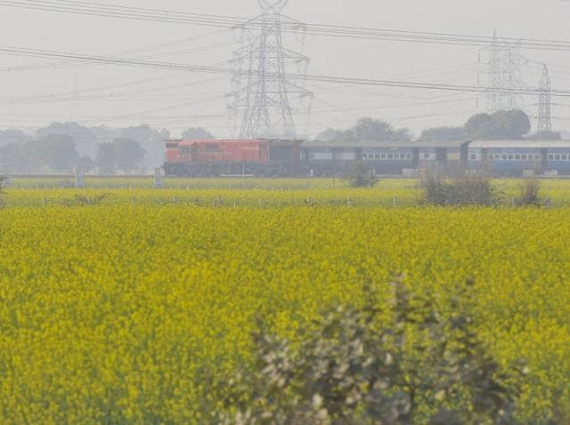 Spelling out his position on GM mustard for the first time, agriculture minister Radha Mohan Singh struck a neutral stance to say he would go by the regulator's decision.
