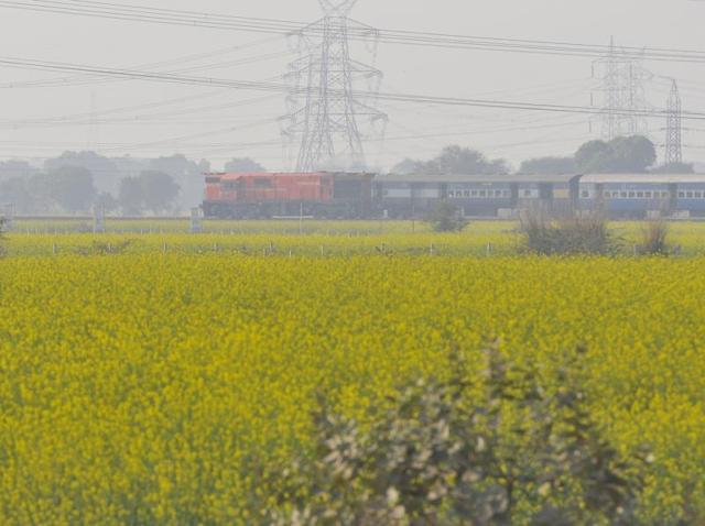 Will back GM mustard if regulator clears it: Farm minister