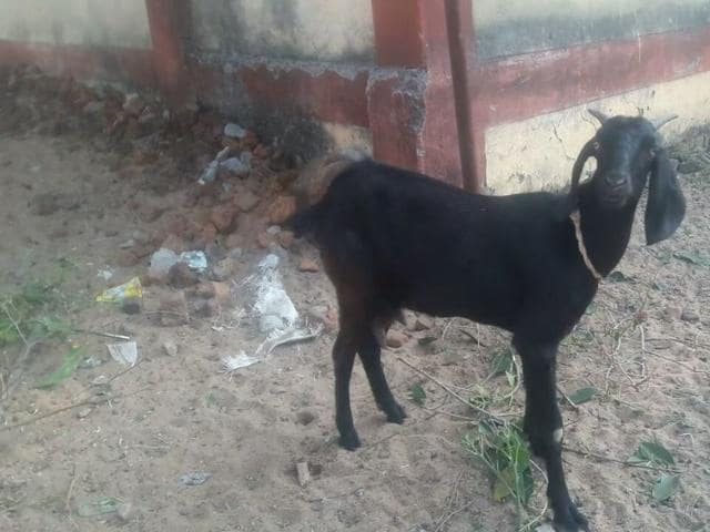 A goat was arrested along with the owner for venturing into a magistrate's garden and damaging it, in Chhattisgarh.